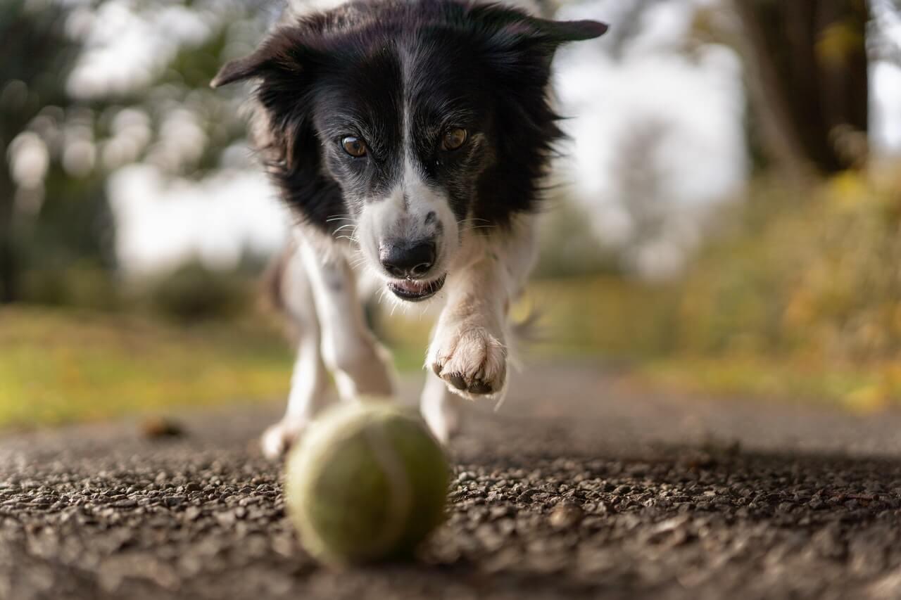 Naturalne gryzaki dla psa, dlaczego warto używać?
